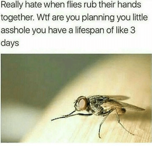 Dank, Wtf, and Asshole: Really hate when flies rub their hands  together. Wtf are you planning you little  asshole you have a lifespan of like 3  days
