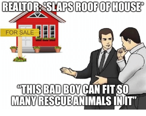 Init: REALTOR: SLAPS ROOFOFHOUSE  FOR SALE |  THIS B  MANY RESCUEANIMALS INIT  BADBOYCAN FIT SO