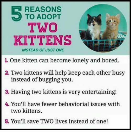 Memes, Kittens, and 🤖: REASONS  TO ADOPT  TWO  KITTENS  INSTEAD OF JUSTONE  l. One kitten can become lonely and bored.  2. Two kittens will help keep each other busy  instead of bugging you.  3. Having two kittens is very entertaining!  4. You'll have fewer behaviorial issues with  two kittens.  5. You'll save TWO lives instead of one!