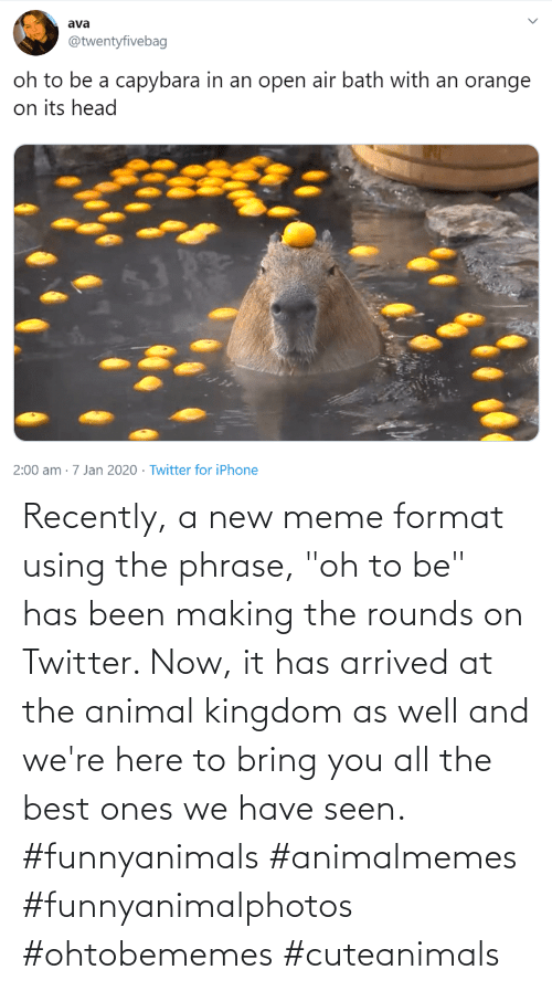 "kingdom: Recently, a new meme format using the phrase, ""oh to be"" has been making the rounds on Twitter. Now, it has arrived at the animal kingdom as well and we're here to bring you all the best ones we have seen. #funnyanimals #animalmemes #funnyanimalphotos #ohtobememes #cuteanimals"