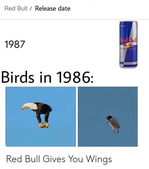 red bull gives you wings: Red Bull / Release date  ed Bul  1987  Birds in 1986: Red Bull Gives You Wings