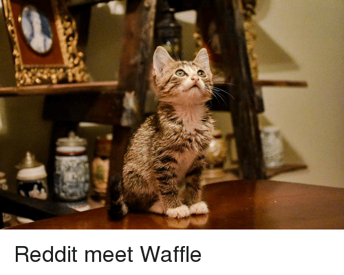 Reddit and Waffle