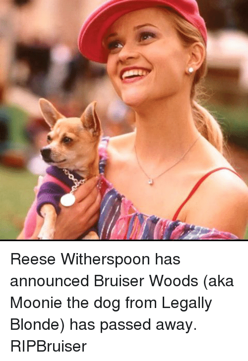 legally blondes: Reese Witherspoon has announced Bruiser Woods (aka Moonie the dog from Legally Blonde) has passed away. RIPBruiser
