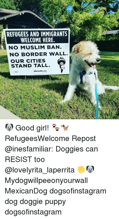 Muslim Ban: REFUGEES AND IMMIGRANTS  WELCOME HERE  NO MUSLIM BAN  NO BORDER WALL.  OUR CITIES  STAND TALL. 🐶 Good girl! 🐾🐕 RefugeesWelcome Repost @inesfamiliar: Doggies can RESIST too @lovelyrita_laperrita ✊🐶 Mydogwillpeeonyourwall MexicanDog dogsofinstagram dog doggie puppy dogsofinstagram