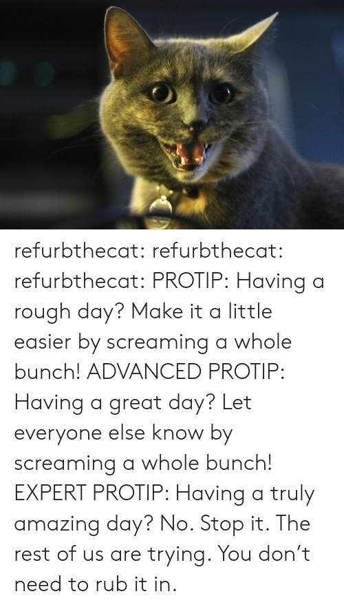 protip: refurbthecat: refurbthecat:  refurbthecat:  PROTIP: Having a rough day? Make it a little easier by screaming a whole bunch!  ADVANCED PROTIP: Having a great day? Let everyone else know by screaming a whole bunch!  EXPERT PROTIP:  Having a truly amazing day?  No. Stop it. The rest of us are trying. You don't need to rub it in.