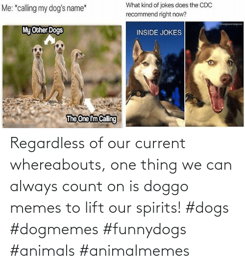 Current: Regardless of our current whereabouts, one thing we can always count on is doggo memes to lift our spirits! #dogs #dogmemes #funnydogs #animals #animalmemes