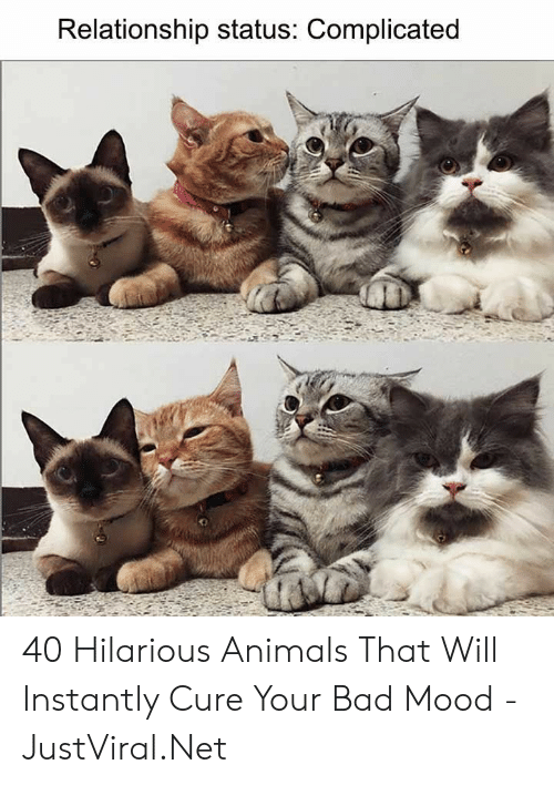 Relationship Status: Relationship status: Complicated 40 Hilarious Animals That Will Instantly Cure Your Bad Mood - JustViral.Net