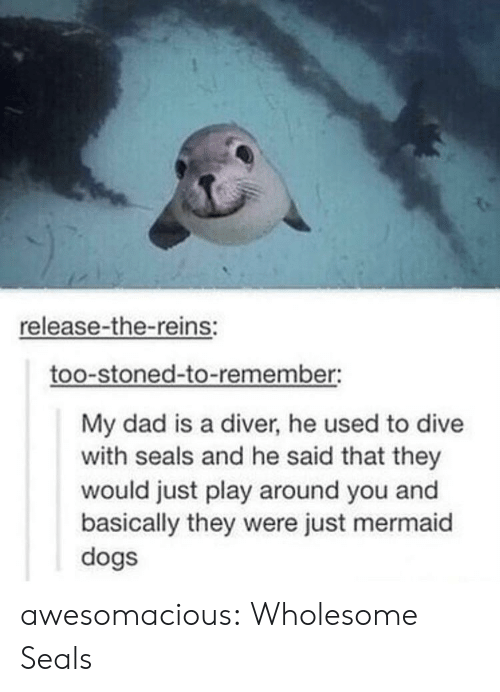 Dive: release-the-reins:  too-stoned-to-remember:  My dad is a diver, he used to dive  with seals and he said that they  would just play around you and  basically they were just mermaid  dogs awesomacious:  Wholesome Seals