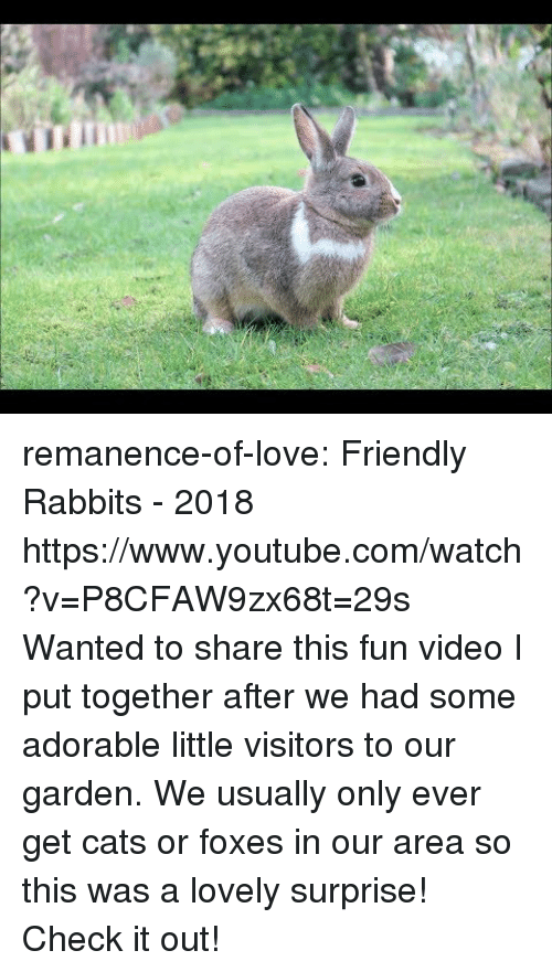 rabbits: remanence-of-love:  Friendly Rabbits - 2018 https://www.youtube.com/watch?v=P8CFAW9zx68t=29s  Wanted to share this fun video I put together after we had some adorable little visitors to our garden. We usually only ever get cats or foxes in our area so this was a lovely surprise! Check it out!
