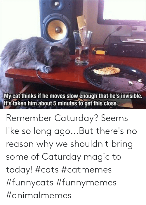 funnymemes: Remember Caturday? Seems like so long ago...But there's no reason why we shouldn't bring some of Caturday magic to today! #cats #catmemes #funnycats #funnymemes #animalmemes