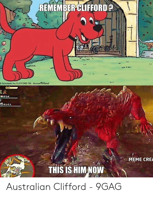 Meme Cre: REMEMBER CLIFFORD  O Scholastic Inc CLIFFORD TM Normanek  はらみ  のザルオス  MEME CRE  THIS IS HIM NOW Australian Clifford - 9GAG