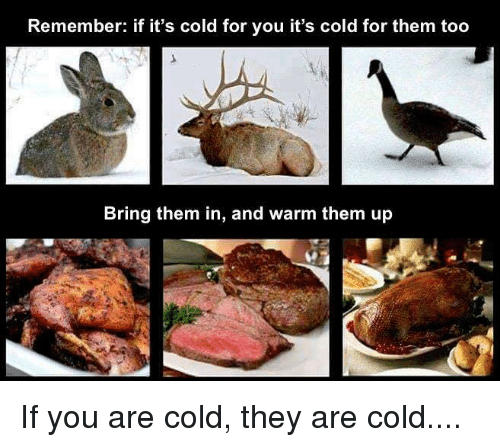 Funny and Sad: Remember: if it's cold for you it's cold for them too  Bring them in, and warm them up If you are cold, they are cold....