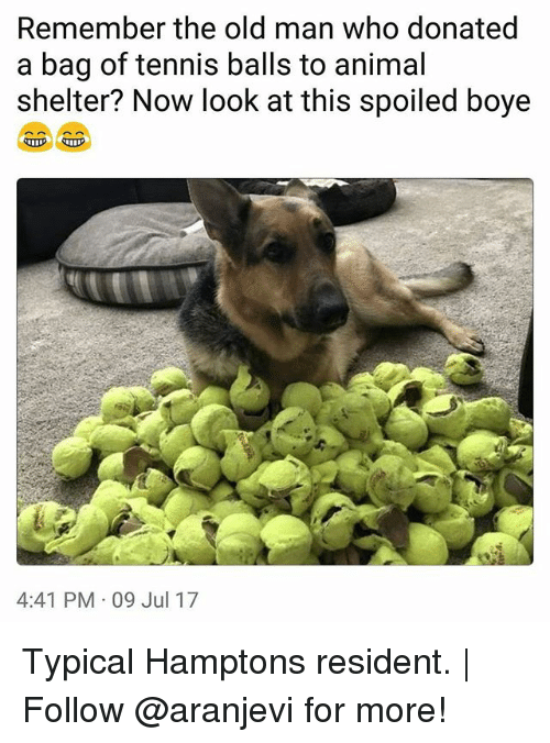 Residente: Remember the old man who donated  a bag of tennis balls to animal  shelter? Now look at this spoiled boye  4:41 PM 09 Jul 17 Typical Hamptons resident. | Follow @aranjevi for more!