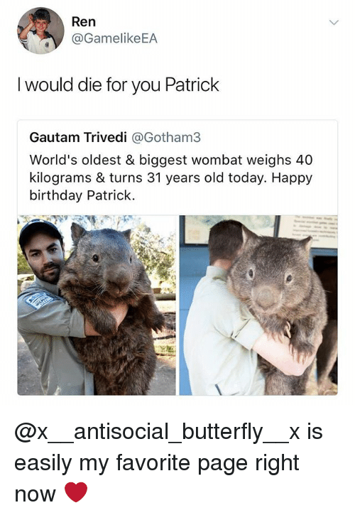 wombat: Ren  @GamelikeEA  I would die for you Patrick  Gautam Trivedi @Gotham3  World's oldest & biggest wombat weighs 40  kilograms & turns 31 years old today. Happy  birthday Patrick @x__antisocial_butterfly__x is easily my favorite page right now ❤️