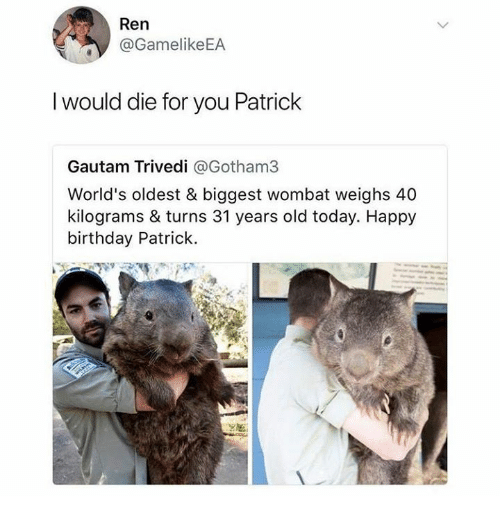 wombat: Ren  @GamelikeEA  I would die for you Patrick  Gautam Trivedi @Gotham3  World's oldest & biggest wombat weighs 40  kilograms & turns 31 years old today. Happy  birthday Patrick.