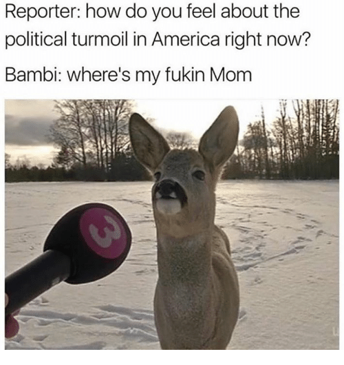 America, Bambi, and Dank: Reporter: how do you feel about the  political turmoil in America right now?  Bambi: where's my fukin Mom