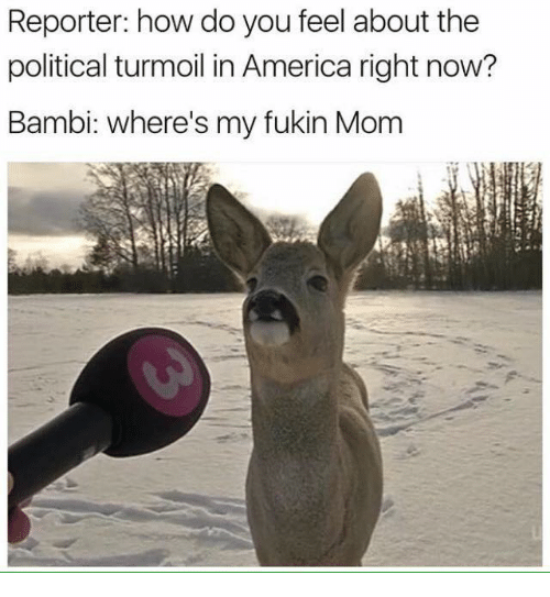 America, Bambi, and Mom: Reporter: how do you feel about the  political turmoil in America right now?  Bambi: where's my fukin Mom