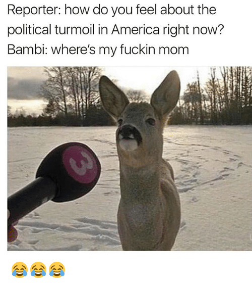 America, Bambi, and Funny: Reporter: how do you feel about the  political turmoil in America right now?  Bambi: where's my fuckin mom 😂😂😂