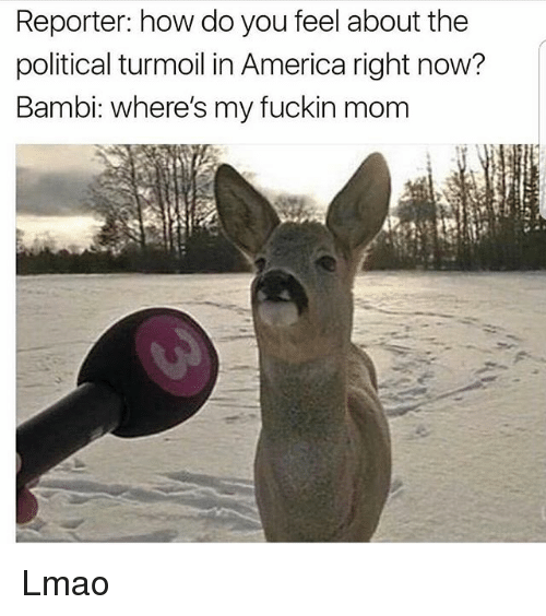 America, Bambi, and Funny: Reporter: how do you feel about the  political turmoil in America right now?  Bambi: where's my fuckin mom Lmao