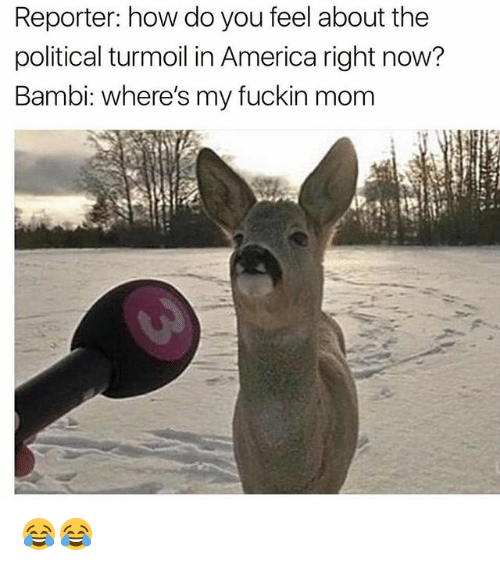 America, Bambi, and Memes: Reporter: how do you feel about the  political turmoil in America right now?  Bambi: where's my fuckin mom 😂😂
