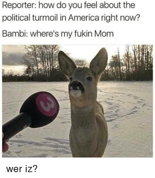 Bambi: Reporter: how do you feel about the  political turmoil in America right now?  Bambi: where's my fukin Mom wer iz?