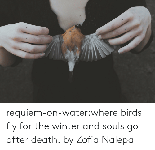 Flickr: requiem-on-water:where birds fly for the winter and souls go after death.by Zofia Nalepa