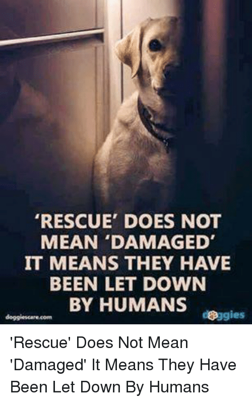 Memes, 🤖, and Means: RESCUE' DOES NOT  MEAN 'DAMAGED'  IT MEANS THEY HAVE  BEEN LET DOWN  BY HUMANS  doggies 'Rescue' Does Not Mean 'Damaged' It Means They Have Been Let Down By Humans