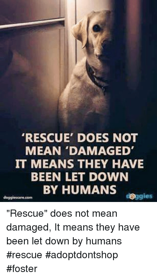 """Memes, 🤖, and Fosters: RESCUE' DOES NOT  MEAN 'DAMAGED'  IT MEANS THEY HAVE  BEEN LET DOWN  BY HUMANS  doggies """"Rescue"""" does not mean damaged, It means they have been let down by humans    #rescue #adoptdontshop #foster"""