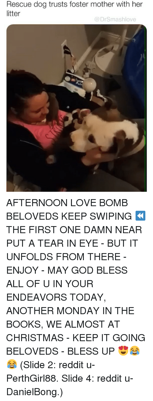 rescue dog: Rescue dog trusts foster mother with her  litter  @DrSmashlove AFTERNOON LOVE BOMB BELOVEDS KEEP SWIPING ⏪ THE FIRST ONE DAMN NEAR PUT A TEAR IN EYE - BUT IT UNFOLDS FROM THERE - ENJOY - MAY GOD BLESS ALL OF U IN YOUR ENDEAVORS TODAY, ANOTHER MONDAY IN THE BOOKS, WE ALMOST AT CHRISTMAS - KEEP IT GOING BELOVEDS - BLESS UP 😍😂😂 (Slide 2: reddit u-PerthGirl88. Slide 4: reddit u-DanielBong.)