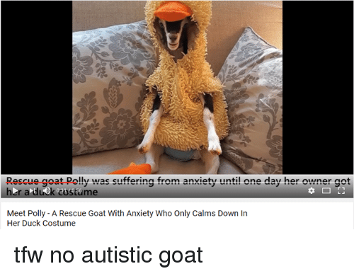 Rescue Goat Pely Was Suffering From Anxiety Until One Day Her - Rescue goat suffers anxiety calms duck costume