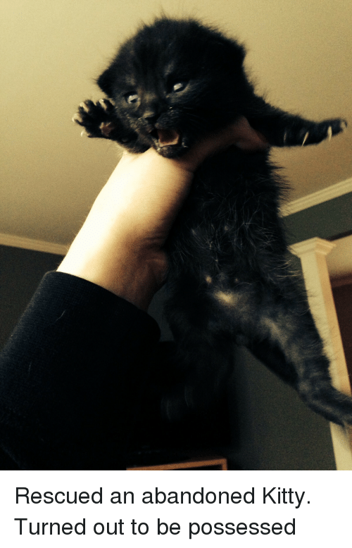 spider monkey: Rescued an abandoned Kitty. Turned out to be possessed