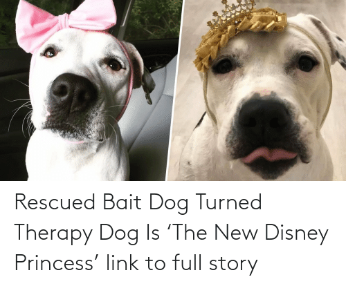 Disney:   Rescued Bait Dog Turned Therapy Dog Is 'The New Disney Princess'  link to full story