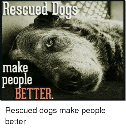 Dogs, Memes, and 🤖: Rescued Dogs  make  people  ETTER Rescued dogs make people better