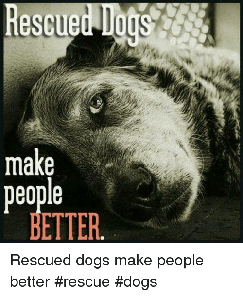 Dogs, Memes, and 🤖: Rescued  make  eople  ETTER Rescued dogs make people better       #rescue #dogs