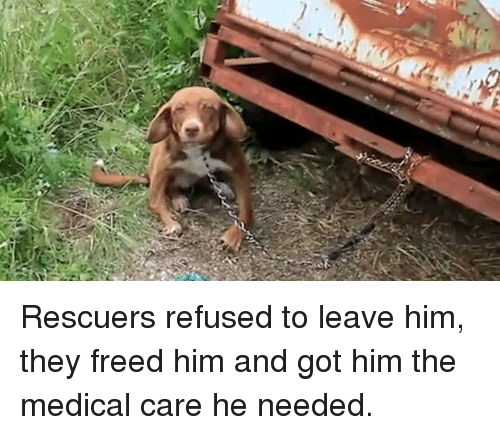 Memes, 🤖, and Medical: Rescuers refused to leave him, they freed him and got him the medical care he needed.