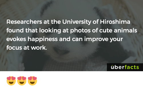 Uber Facts: Researchers at the University of Hiroshima  found that looking at photos of cute animals  evokes happiness and can improve your  focus at work.  uber  facts 😍😍😍