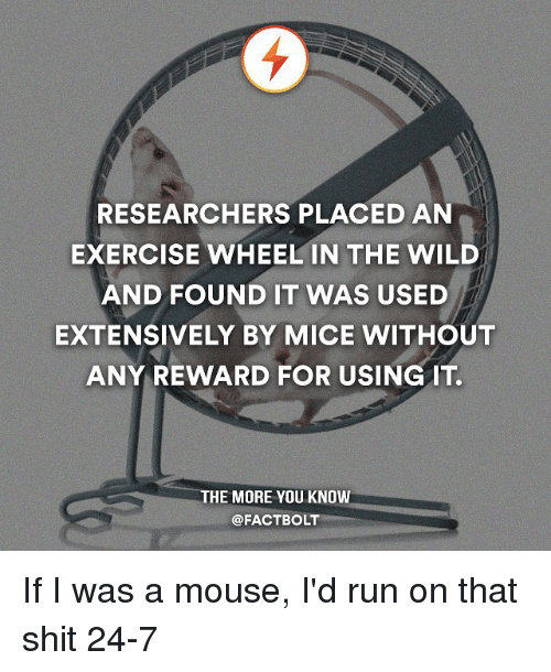mouses: RESEARCHERS PLACED AN  EXERCISE WHEEL IN THE WILD  AND FOUND IT WAS USED  EXTENSIVELY BY MICE WITHOUT  ANY REWARD FOR USING IT.  THE MORE YOU KNOW  @FACTBOLT If I was a mouse, I'd run on that shit 24-7