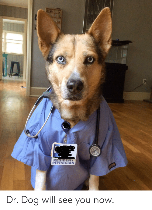 dr dog: RESIDENT  PHYSICIAN Dr. Dog will see you now.