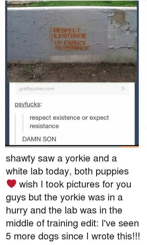 Dogs, Memes, and Puppies: RESPECT  EXISTENCE  OR EXPECT  RESISTANOF  graffquotes.com  psyfucks:  respect existence or expect  resistance  DAMN SON shawty saw a yorkie and a white lab today, both puppies ❤ wish I took pictures for you guys but the yorkie was in a hurry and the lab was in the middle of training edit: I've seen 5 more dogs since I wrote this!!!