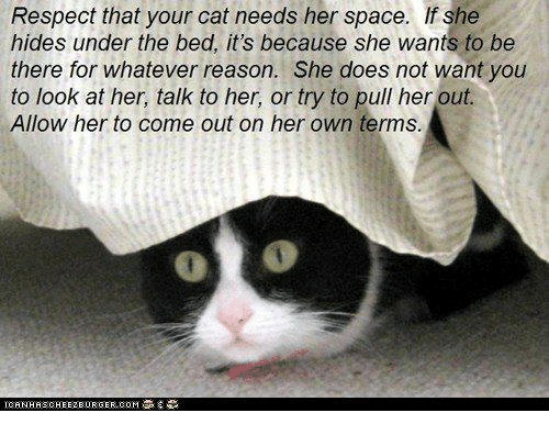 Memes, Respect, and Space: Respect that your cat needs her space. If she  hides under the bed, it's because she wants to be  there for whatever reason. She does not want you  to look at her, talk to her, or try to pull her out.  Allow her to come out on her own terms