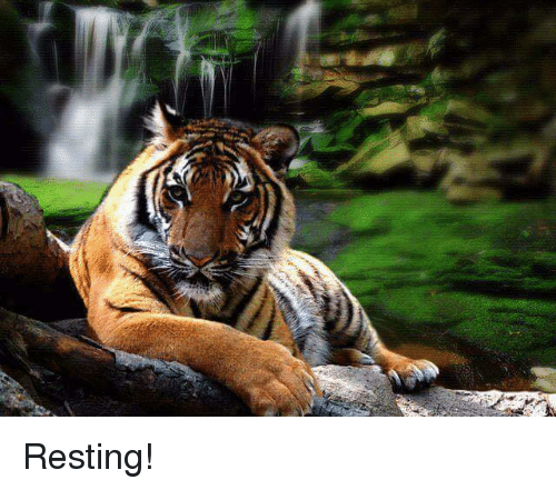 Memes, 🤖, and Rest: Resting!