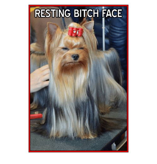 Memes and 🤖: RESTING BITCH FACE