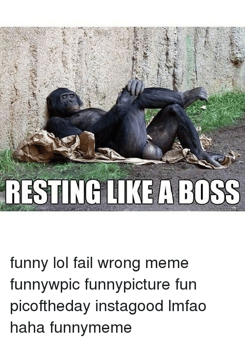Fail, Funny, and Lol: RESTING LIKE A BOSS funny lol fail wrong meme funnywpic funnypicture fun picoftheday instagood lmfao haha funnymeme