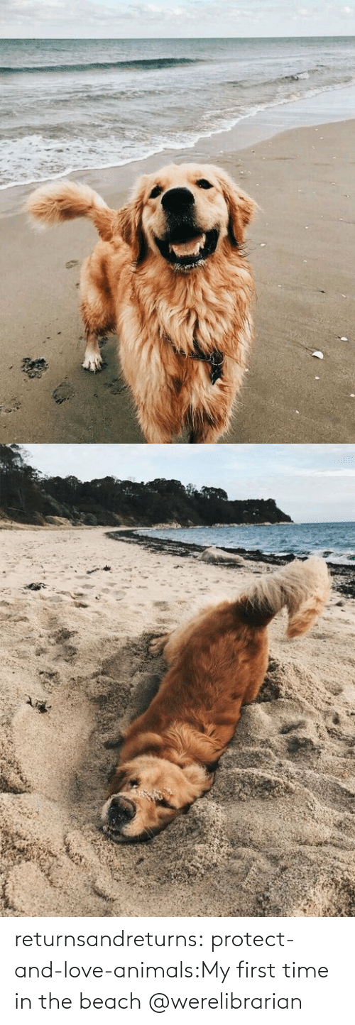 First Time: returnsandreturns:  protect-and-love-animals:My first time in the beach @werelibrarian