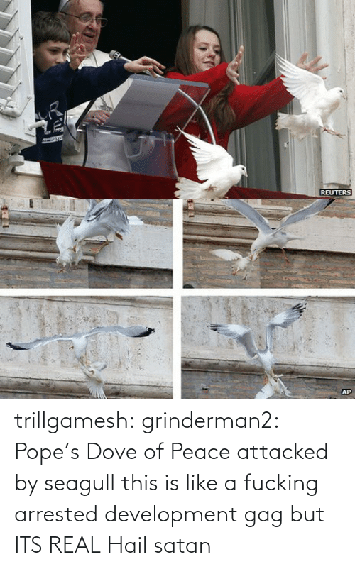 arrested development: REUTERS   AP trillgamesh:  grinderman2:  Pope's Dove of Peace attacked by seagull  this is like a fucking arrested development gag but ITS REAL   Hail satan