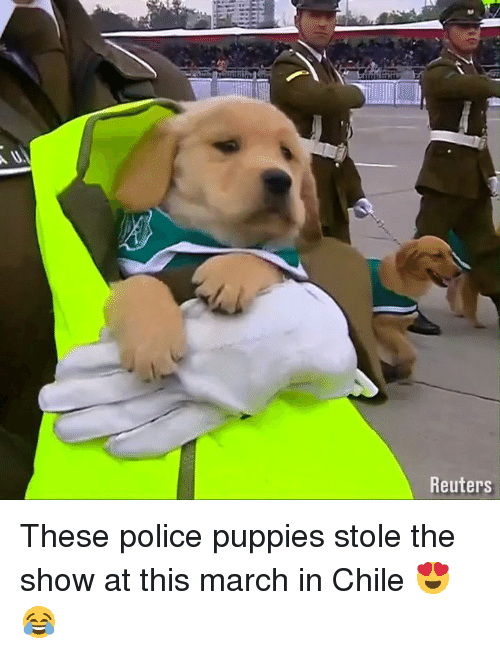 Reuters: Reuters These police puppies stole the show at this march in Chile 😍😂