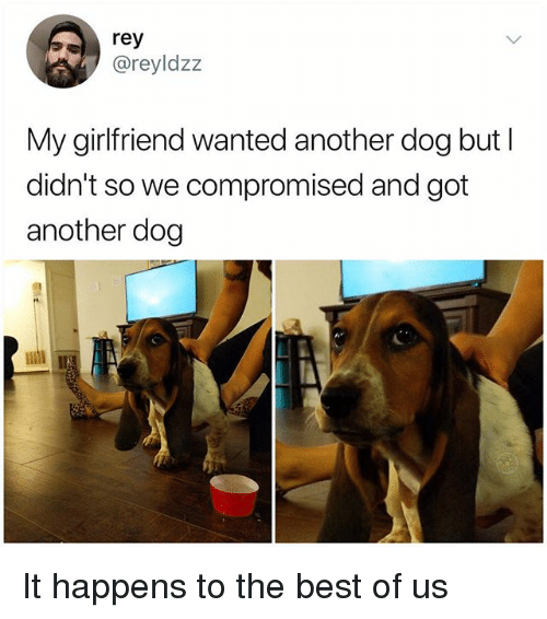 Memes, Rey, and Best: rey  @reyldzz  My girlfriend wanted another dog but l  didn't so we compromised and got  another dog It happens to the best of us