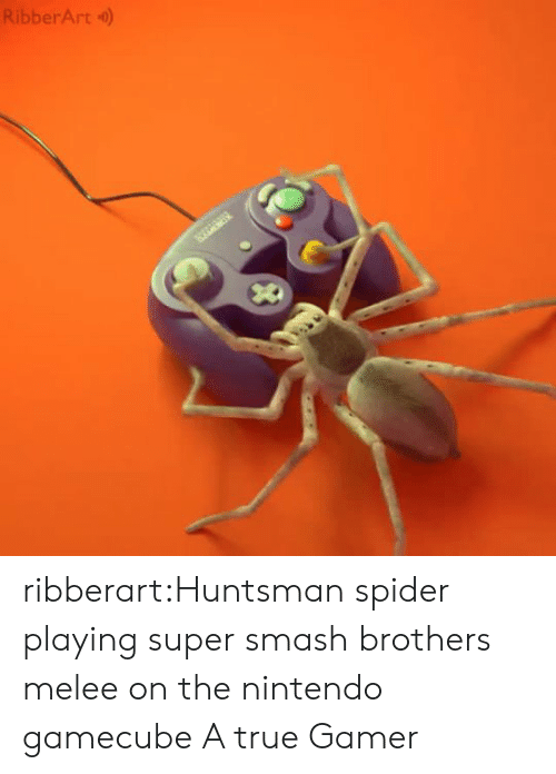 Smashing: RibberArt) ribberart:Huntsman spider playing super smash brothers melee on the nintendo gamecube  A true Gamer