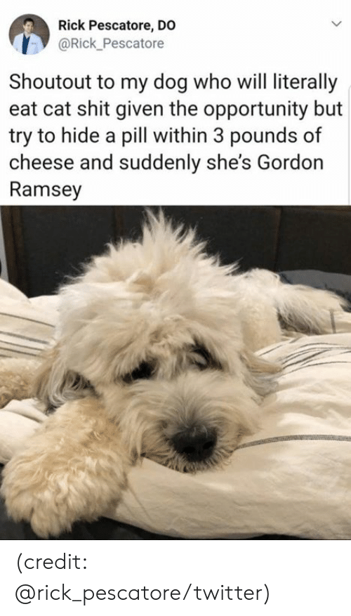 gordon ramsey: Rick Pescatore, DO  @Rick_Pescatore  Shoutout to my dog who will literally  eat cat shit given the opportunity but  try to hide a pill within 3 pounds of  cheese and suddenly she's Gordon  Ramsey (credit: @rick_pescatore/twitter)