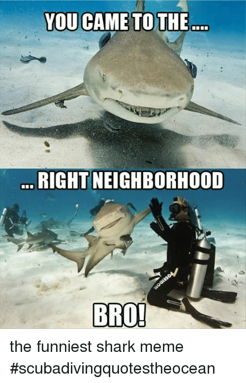 Meme, Shark, and Bro: RIGHT NEIGHBORHOOD  BRO the funniest shark meme #scubadivingquotestheocean